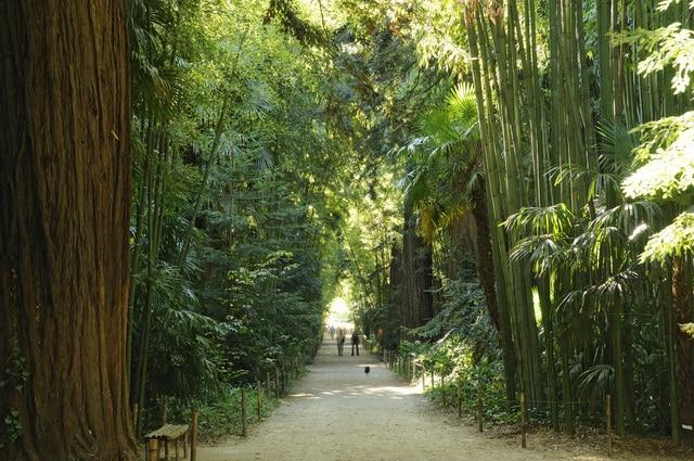 Bambouseraie - Tourisme Gite Roulotte Entre Vignes et Oliviers - Cévennes Gard