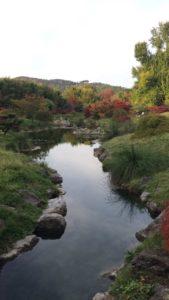 vallee du dragon bambouseraie - gite roulotte Entre vignes et oliviers - cevennes - gard